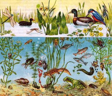 рисунок пруда и попытайтесь дать характеристику его экосистемы через видовой состав живых организмов и их связанность пищевыми цепочками.