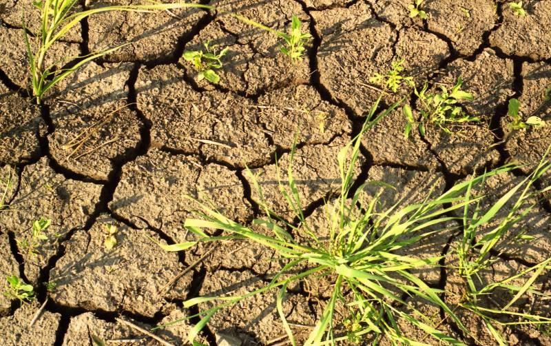 Почва и жизнь на Земле
